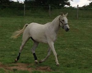 G trotting in the field